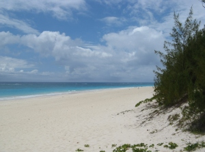 Elbow Beach, Bermuda (aka gringita, 2009)