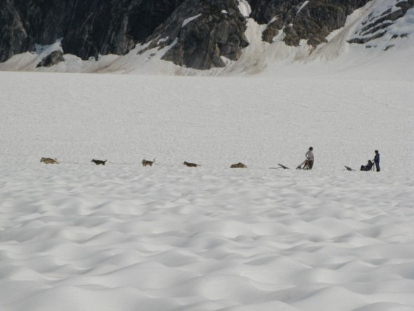 Dogsledding on Mendenhall Glacier, Juneau Alaska (aka gringita, 2008)