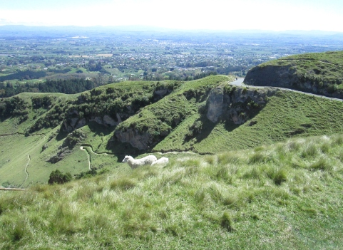 Views from Te Mata Peak (2014, aka gringita)