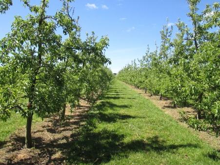 Pernel Orchards and Farm Tour (2014, aka gringita)