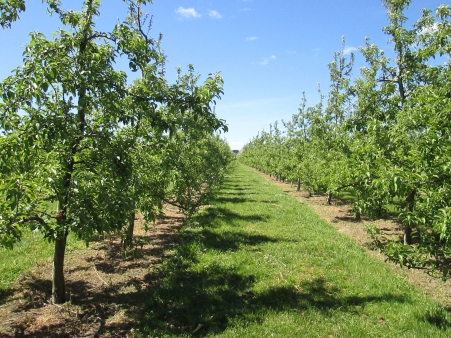 Pernel Orchards and Farm Tour (2014, aka gringita)
