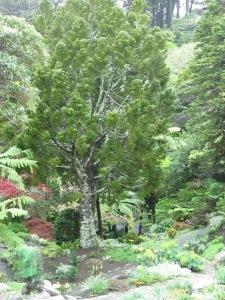 Scenes from Wellington Botanic Garden (2014, aka gringita)