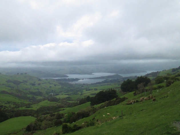 Scenic shot back toward Akaroa (photo: aka gringita, 2014)